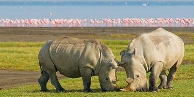 Rothschild safaris
